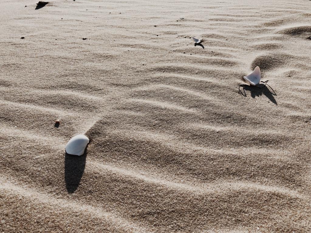【景色】砂浜と貝殻の素材